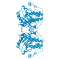 Recombinant, human 3-phosphoinositide-dependent protein kinase 1 (PDK1), 10µg