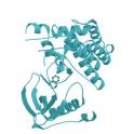 Recombinant human NTRK2 /TRKB Protein, Fc Tag, 100µg