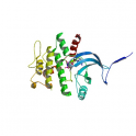 Recombinant human biotinylated mitogen-activated protein kinase kinase 4 (MKK4), unactive, 5 µg