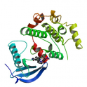 Recombinant human biotinylated mitogen-activated protein kinase kinase 6 (MKK6), unactive, 5 µg
