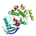 Recombinant human mitogen-activated protein kinase kinase 6 (MKK6), unactive, 20 µg