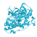 Recombinant human biotinylated MAP kinase 11 / p38 beta, unactive, 5 µg