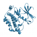 Recombinant human serine/threonine protein kinase PIM1 dephosphorylated, 20 µg
