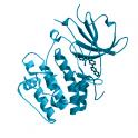 Recombinant human serine/threonine-protein kinase SGK1, 10 µg