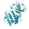 Recombinant human serine/threonine-protein kinase SGK3, 10 µg