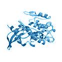 Recombinant human Protein Kinase C (PKC) zeta, 10 µg