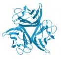 Recombinant Biotinylated Human EphB4, ultra sensitivity (primary amine labeling), 25 µg