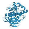 recombinant, human protein phosphatase DUSP3, 20  µg