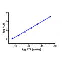 bioluminescence based  ATP determination kit (sensitive, 10 ml)