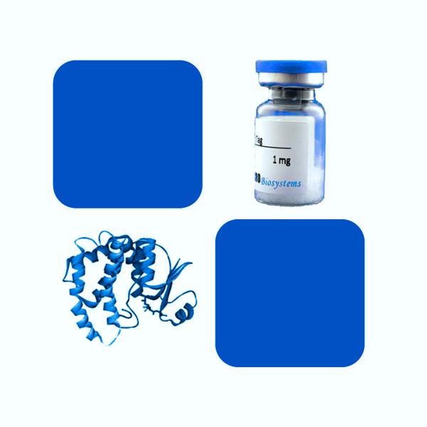 Recombinant SARS-CoV-2 (COVID-19) S Protein RBD (N354D