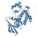 Recombinant human tyrosine-protein kinase Lyn, 10 µg