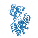 Recombinant human CDK5/p35NCK, active protein kinase,10 µg