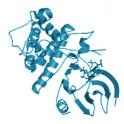 Recombinant human CDK7/CycH/MAT1, active protein kinase,10 µg