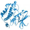 Recombinant human serine/threonine-protein kinase PIM-1, 20 µg
