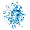 Recombinant human ACVR1, protein kinase domain, 10 µg