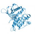 Recombinant, human anaplastic lymphoma kinase / ALK, protein kinase domain, 10 µg