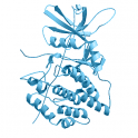 Recombinant, human vaccinia-related kinase (VRK1), 10 µg