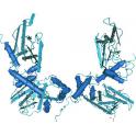 Recombinant human cAMP-dependent protein kinase: PKA, RI beta, 25 µg