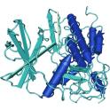 Recombinant human Casein kinase 2 / CK2 alpha2 subunit, 10 µg