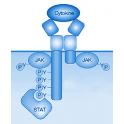 ActiveMax® Recombinant Human TGF beta1 Protein, Tag Free, 2x 500 µg