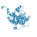 Recombinant human protein kinase C (PKC) eta, 10 µg
